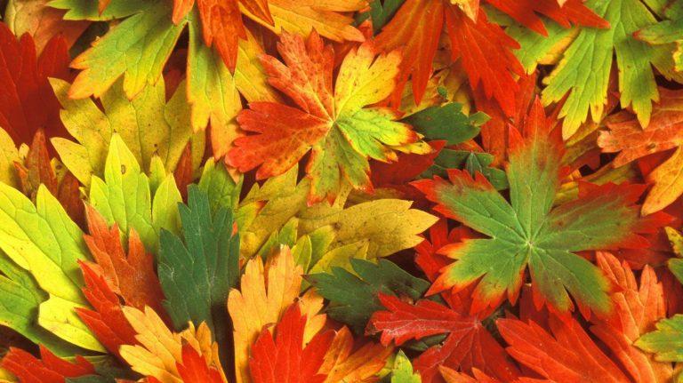 De leukste DIY's met herfstblaadjes